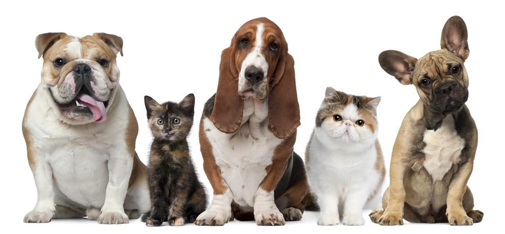 Heartworm Awareness from Terra Losa Animal Clinic