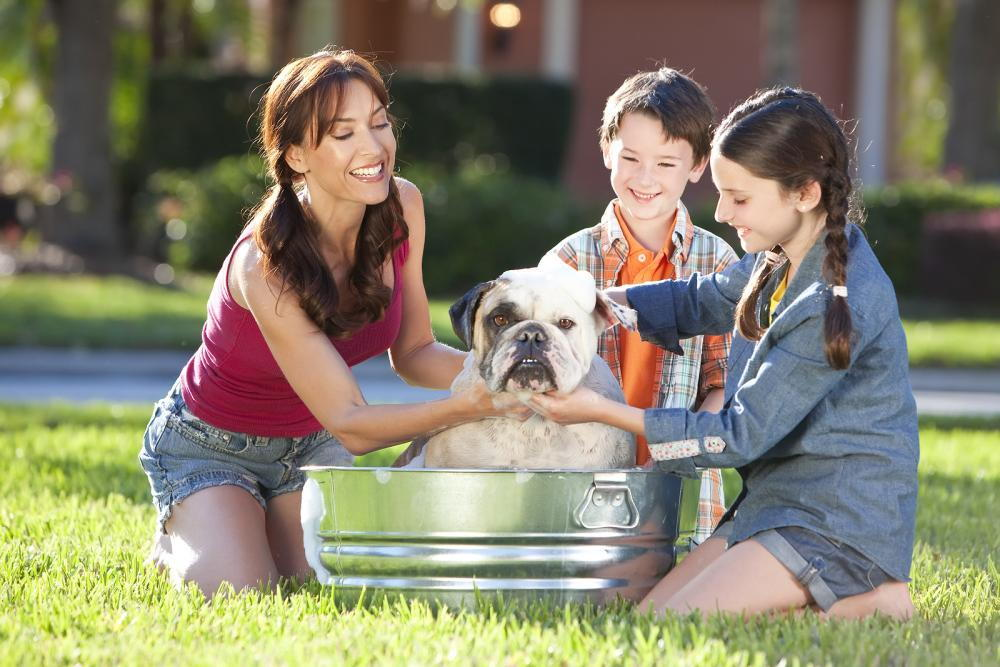 dog getting washed by family