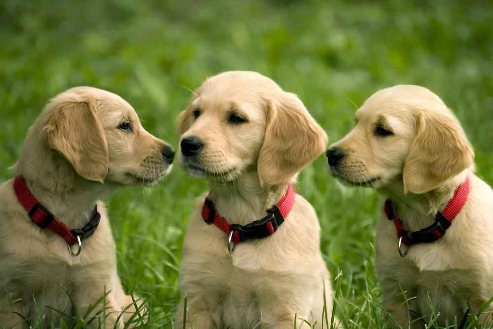three dogs hanging out in a grass field