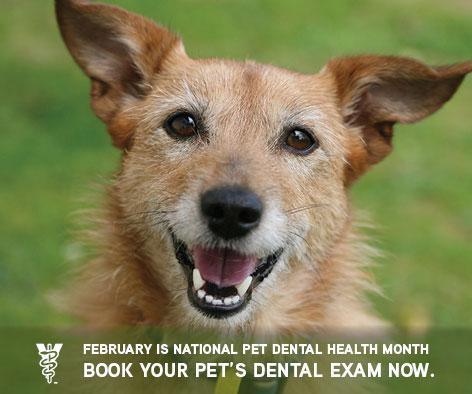 Zionsville pet dental health