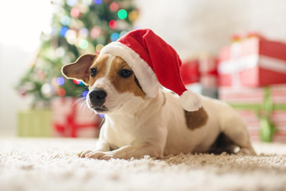Dog wearing a Santa hat on christmas