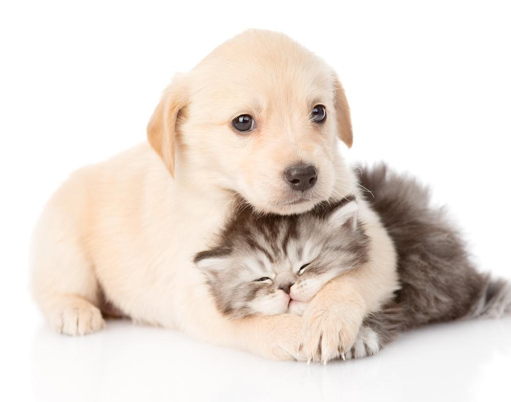 Louisville KY Veterinarian at Doerr Animal Clinic shares the most important deciding factors when trying to find a vet in Louisville KY