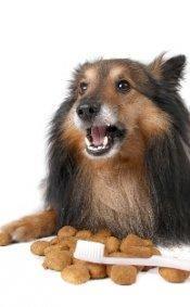 Newport News pet dentistry tips provided by veterinarian