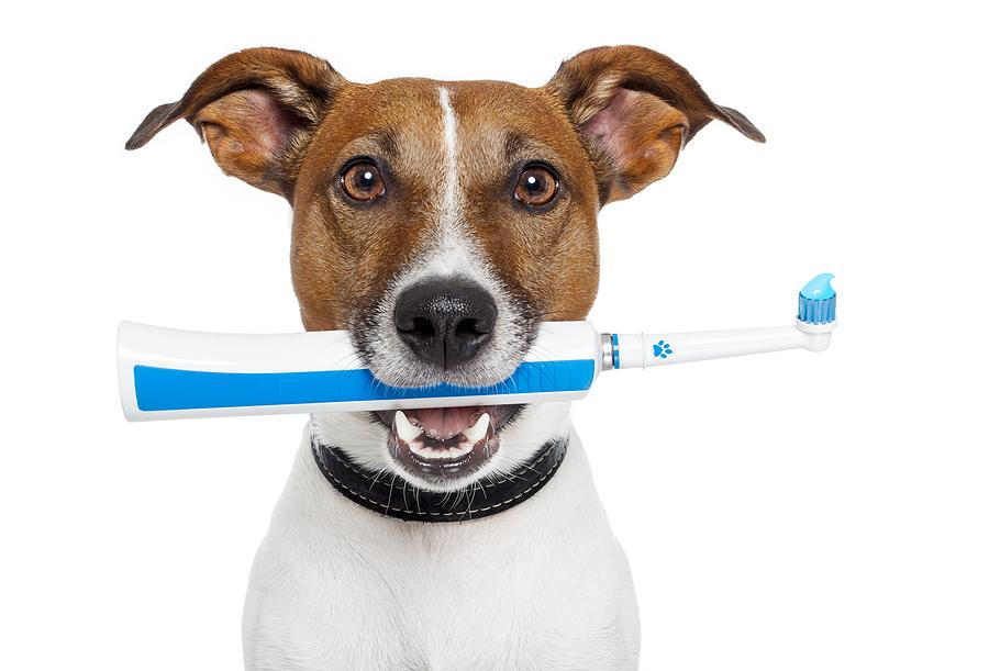 Dog with tooth brush in mouth