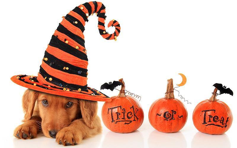 Image result for dog halloween