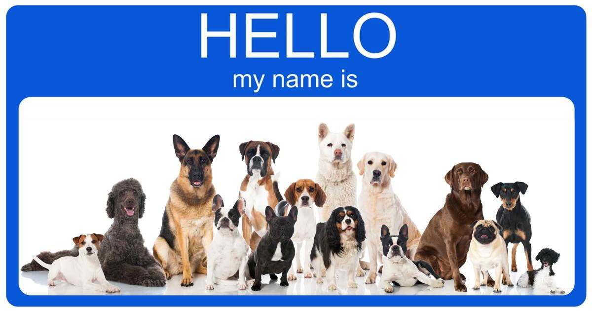 Image result for naming your pet