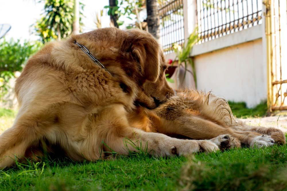dog relaxing in a patch of grass
