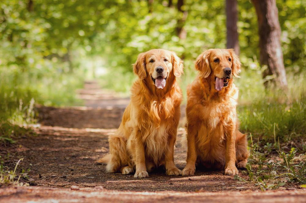 two dogs sitting on a hiking trail