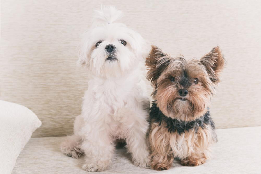 two dogs in Rancho Cucamonga, CA