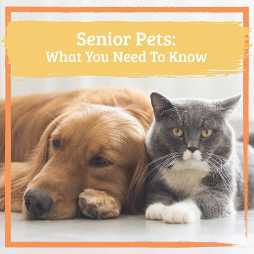 Senior Pets: What You Need To Know