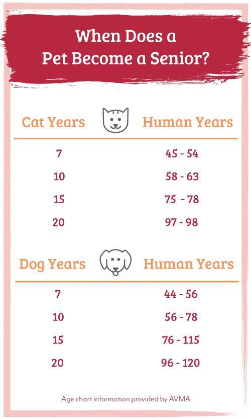 When Does A Pet Become A Senior - Age Comparison Chart
