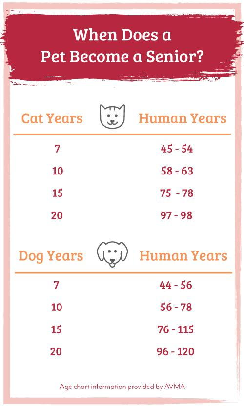 When Does A Pet Become A Senior - Age Comparison Chart