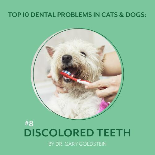 Top 10 Dental Problems in Cats and Dogs: Discolored Teeth