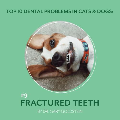 Top 10 Dental Problems in Cats and Dogs: Fractured Teeth