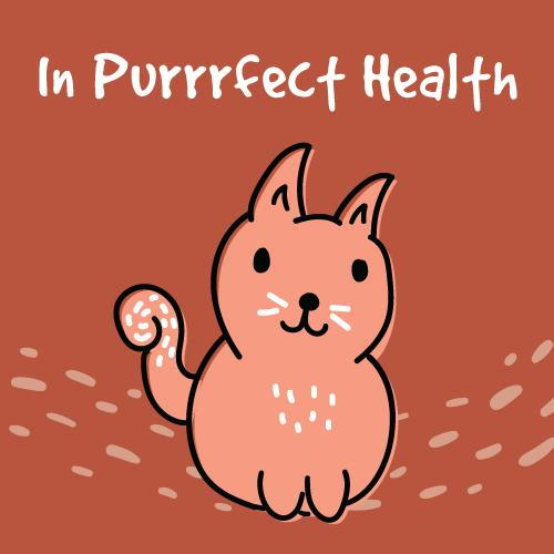 In Purrrfect Health: Has Your Cat Had THeir Annual Exam at Best Friends Veterinary Hospital?