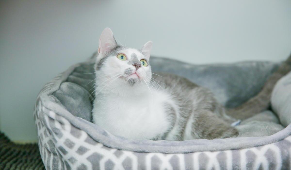 Cat Exam at Best Friends Veterinary Hospital