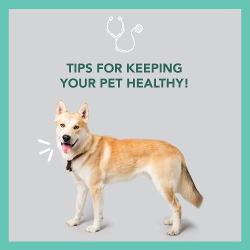 Tips For Keeping Your Pet Healthy