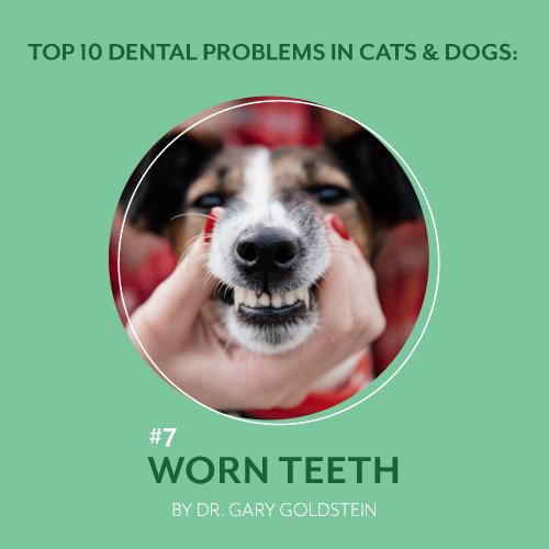 Top 10 Dental Problems in Cats & Dogs: #7 Worn Teeth, By Dr. Gary Goldstein