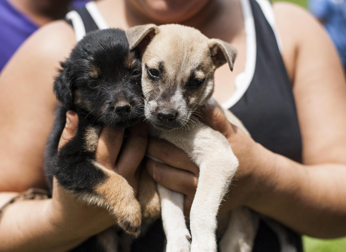 Dogs and Cats in Nicaragua - Lakefield Veterinary Group and World Vets help the community of Nicaragua
