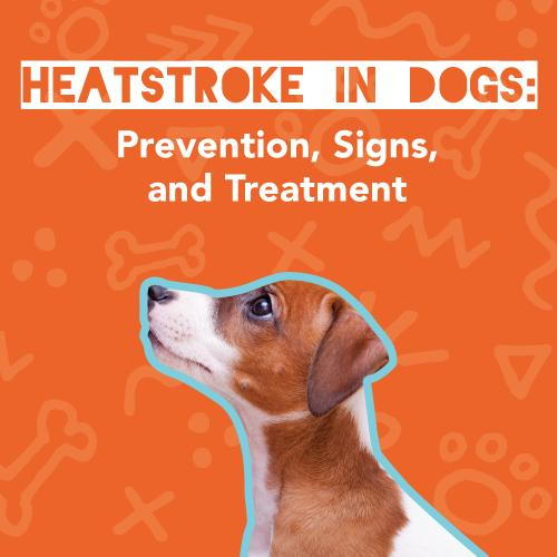 Heatstroke in dogs: prevention, signs, and treatment