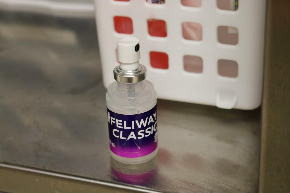Feliway- A feline pheromone used at SLVS