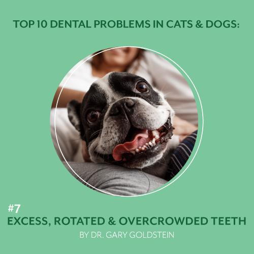 Top 10 Dental Problems in Cats & Dogs: #7 Excess, Rotated & Overcrowded Teeth, By Dr. Gary Goldstein