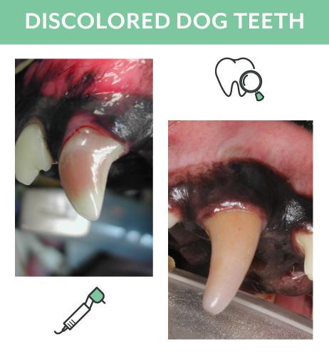 Discolored_Dog_Teeth.png