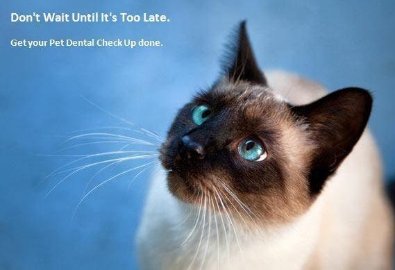 pet dental checkup dentist veterinarian langley bc