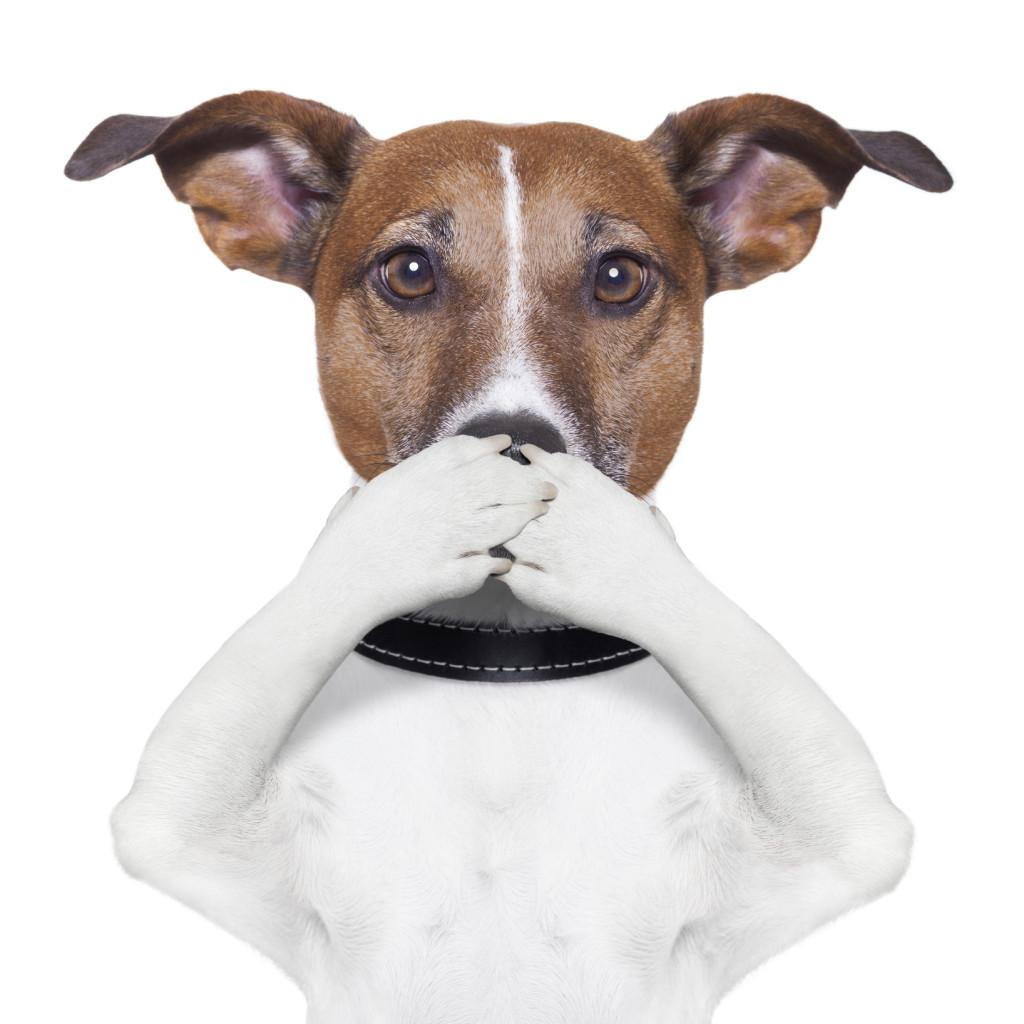 Halitosis bad breathe dentist veterinarian dentist langley
