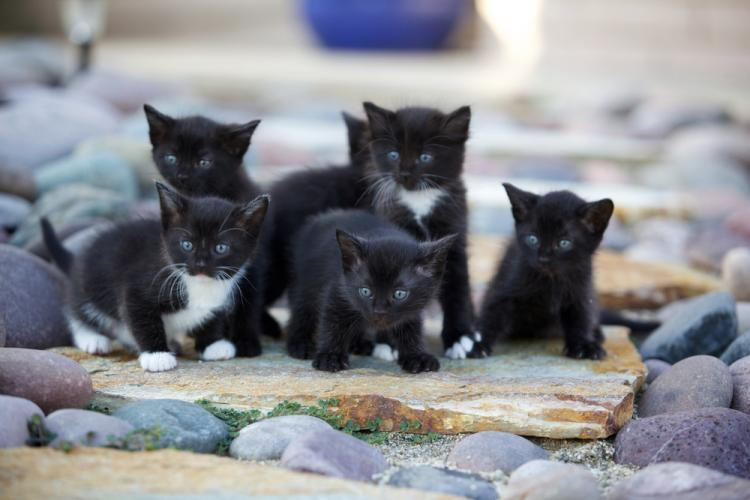 little kittens that needs to be spayed and neutered