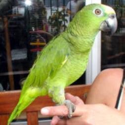 bird exotic pet vet