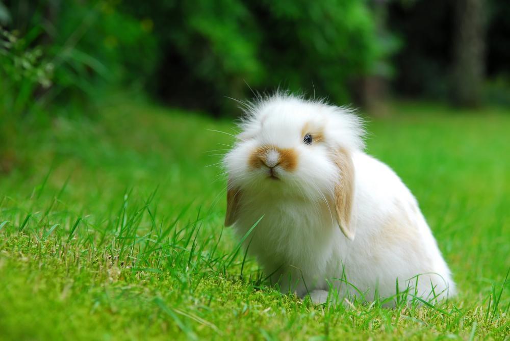 rabbit standing in grass before seeing a phoenix veterinarian in phoenix