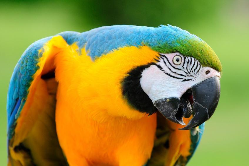 parrot in Phoenix, AZ