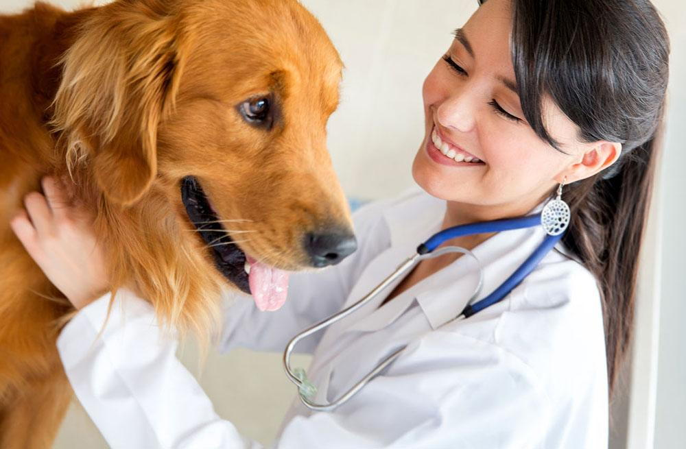 Dog getting checked by a veterinarian