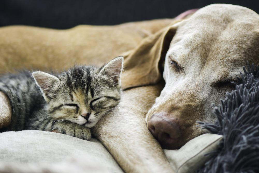 Dog and cat cuddling after a trip to the vet.