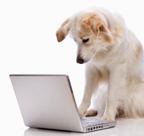 compdog.jpg