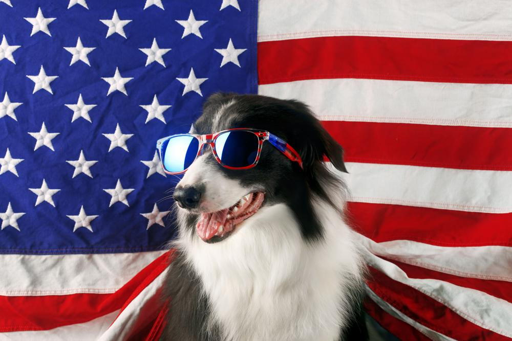 Dog celebrating 4th of July