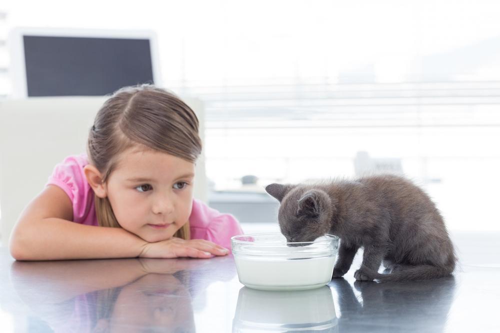 little girl feeding her kitten a bowl of milk after pet nutrition counseling form her vet in Lynwood