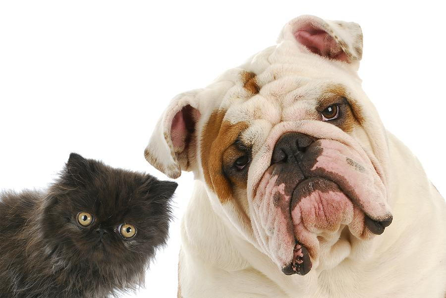 dog and cat in east los angeles