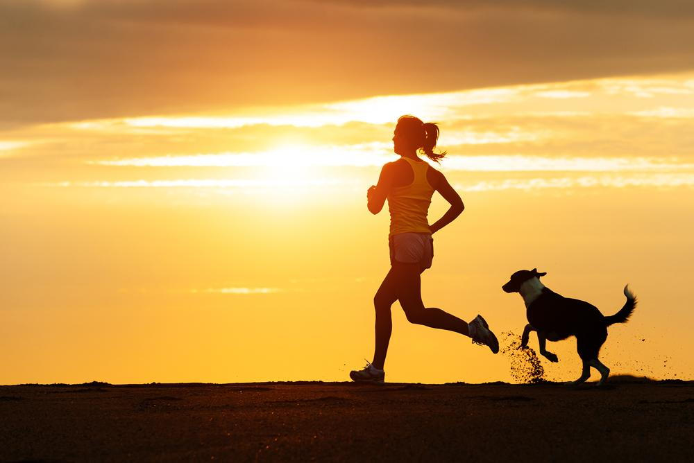 Importance of Canine Fitness