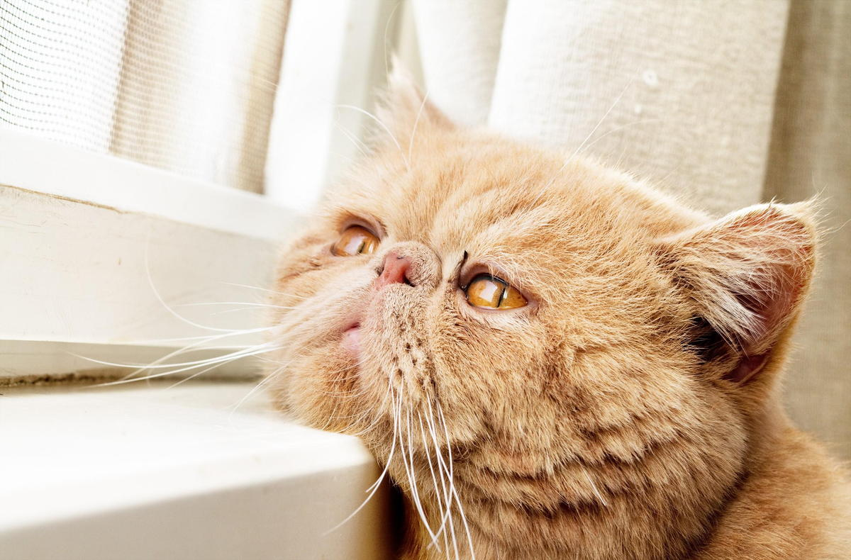 Urinating outside the litter box – the behavioural side of