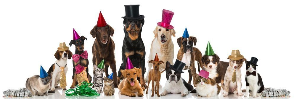 pets celebrating