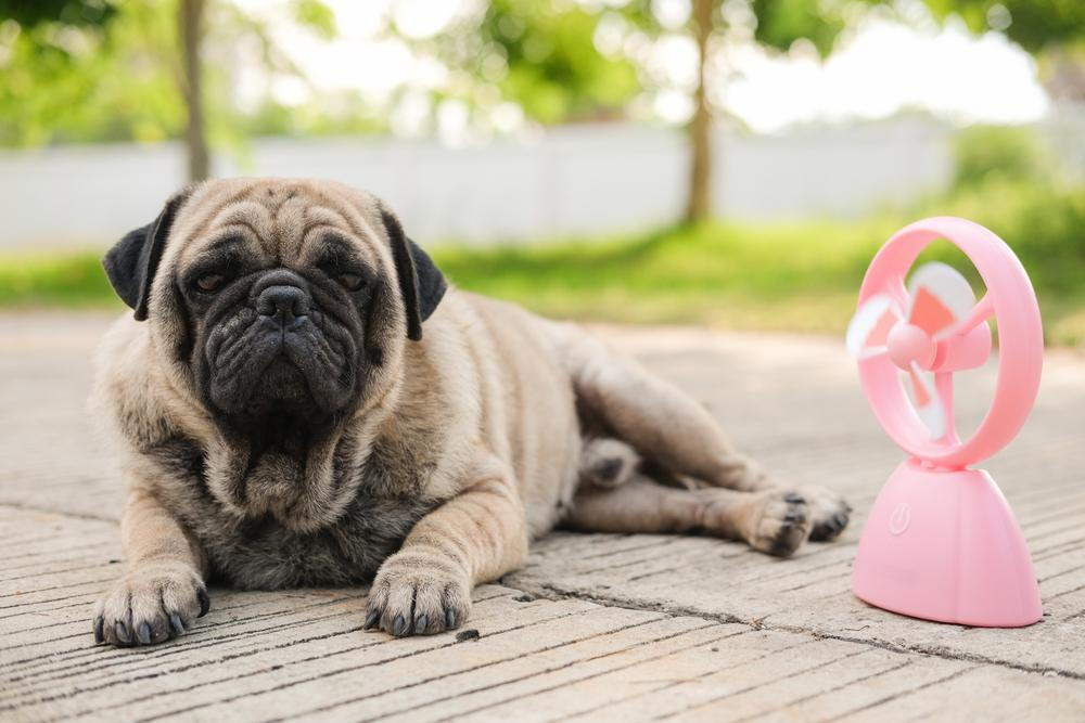protecting your pets paws from the summer heat from your veterinarian in coronado