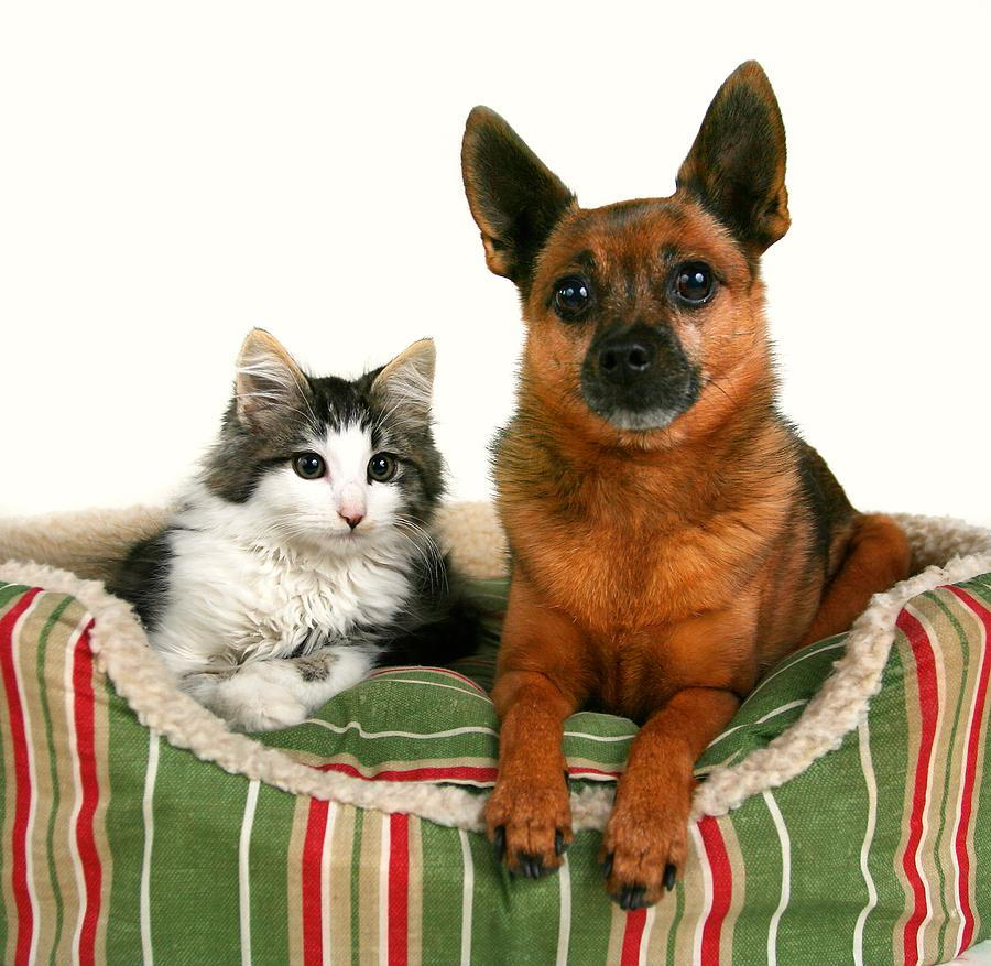 Cat and dog sitting together in Coronado, CA